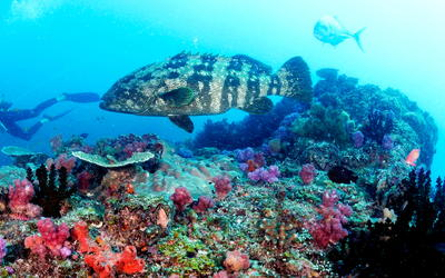 Diving holiday in Mozambique.