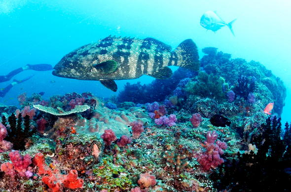 Mozambique diving coral reefs and marine life.