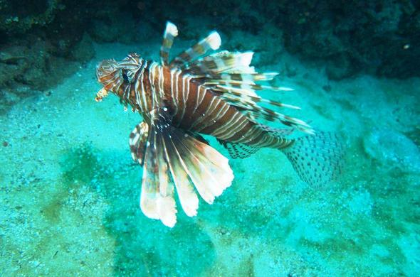 See fancy fish while snorkelling.