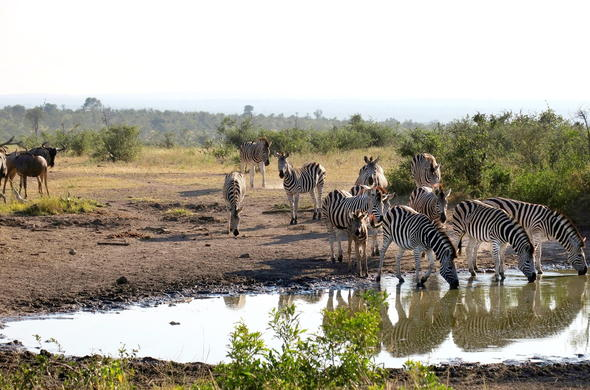 Spot an abundance of wildlife during a Kruger Park Safari.