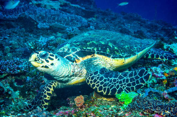 Turtle in Mozambique.